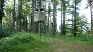How to Build a Deer Blind on a Budget